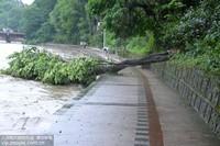 6月22日,贵州省遵义市湘江河边,一棵大树被风吹倒。