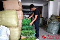 乔江在清点即将发给客户的仿真花草产品。