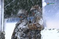 风雪中坚守。王昊 摄