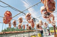 白马井镇红鱼是远近闻名的儋州特色农产品品牌