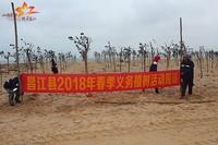 昌江对海岸带200米红线范围内进行复绿