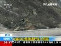 四川:九寨沟公路偶遇野生大熊猫