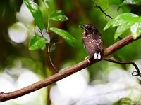 2018年6月10日,刚刚离开洞巢的雏鸟。摄于三亚亚龙湾热带天堂森林旅游区。(黄庆优摄)
