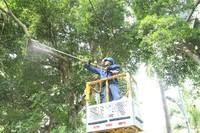 供电人员正在对危及线路安全的高杆植物进行清理(杨永光 摄)