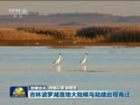 联播快讯:吉林波罗湖湿地大批候鸟陆续启程南迁