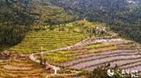 宝山村的致富经:发展集体经济 带领村民共同富裕