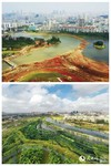 海口凤翔湿地公园治理前后对比图(上图为治理前,下图为治理后)