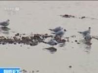 内蒙古:龙游湾国家湿地公园迎来候鸟