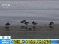 河北:气温回升  多地迎来迁徙候鸟