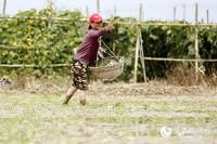 海口东山镇农民正在插秧