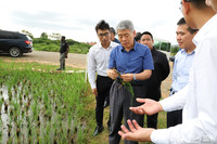宁夏回族自治区政协主席崔波高度评价嘎瓦1R号水稻实验项目并现场给予指导(姜宣 摄)