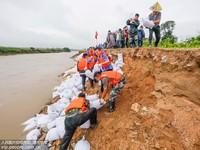 6月24日,江西广昌县甘竹镇大嵊村下车河堤抢险救灾现场,近200名党员干部群众正在装运沙袋、抢修河堤。