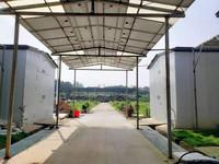 草菇菇房+光伏发电产业综合体(人民网 王瑶/摄)