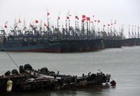 8月11日,船只停靠在日照黄海中心渔港。