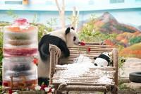 8月12日,大熊猫思嘉在熊猫馆内活动。