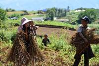 王福美走到田间地头向乡亲了解今年苦荞的种植情况