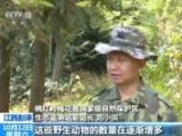 江西彭泽:桃红岭保护区梅花鹿种群逐年增多