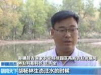 """新疆昌吉:""""三眼恐龙虾""""现身老龙河胡杨林"""