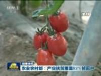 联播快讯:农业农村部——产业扶贫覆盖92%贫困户