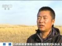 新疆:玛纳斯湿地公园迎来候鸟迁徙高峰