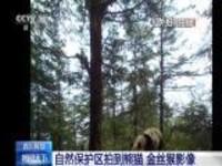 四川阿坝:自然保护区拍到熊猫 金丝猴影像