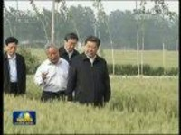 """河南:稳产提质 打好粮食生产""""王牌"""""""