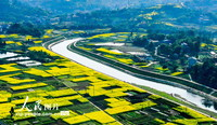3月6日,四川省华蓥市庆华镇在改造后的滩涂上种植的油菜花正竞相开放,犹如披上锦绣,把华蓥河装点得更加美丽。