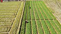 3月10日,南昌县冈上镇农民春耕备耕的田间作业。