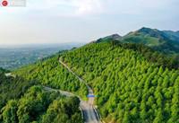 2020年5月4日,绿郁葱葱的油樟林把四川省广安华蓥市华龙办事处柏木山装点得生机盎然。