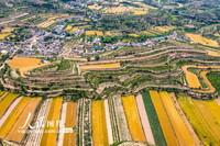 2020年5月24日,在山西省运城市万荣县汉薛镇东风村拍摄的美景图画的金色梯田。