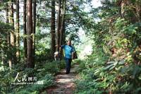 7月29日,张林昌走在前往贵州省锦屏县河口乡韶霭村的山路上。