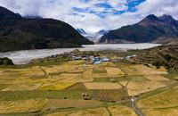 这是9月10日在西藏昌都市八宿县然乌镇来古村拍摄的青稞田(无人机照片)。
