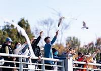2021年1月2日,游客在昆明海埂大坝给红嘴鸥喂食。