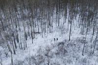 1月12日,吕建生和王少亭在北极村附近的山林中进行电力巡线(无人机照片)。