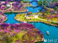 春景如画的湖上梅林。 张卓君摄