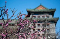 3月21日,明城墙遗址公园山桃花、梅花争相盛开,吸引了许多游客前来观赏游玩。人民网记者 翁奇羽 摄