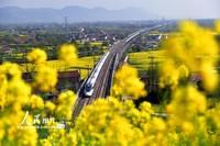 2021年3月24日,一列动车组列车行驶在陕西汉中市境内的西成高铁上。