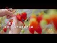 【人民記憶:百年百城】淄博奔小康