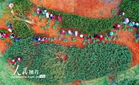 2021年4月2日,江西省赣州市会昌县贡水系统治理工程贡江公园施工段,工人在沿河绿道种植绿化树木和林下绿植。