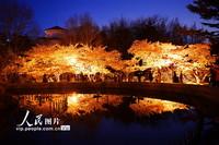 2021年4月6日,游客在青岛市中山公园夜游赏樱。
