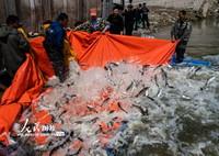 4月15日,工作人员在湖北省宜昌市秭归县归州镇为长江进行人工增殖放流活动。