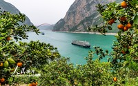 4月17日,在湖北省宜昌市秭归县兵书宝剑峡水域附近,两艘游轮从花果同树的脐橙园前经过。