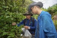 5月11日,中国计量大学植物生态学教授孙俊威(左)与参与此次调查的助理刘煜坤一起采集植物标本。
