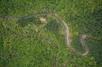 寧夏六盤山自然保護區內綠意盎然(無人機照片,6月2日攝)。新華社記者 楊植森 攝