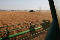 6月6日,在河南省周口市黃泛區農場九分場的麥田里,農機手操作收割機收割小麥。新華社記者 許雅楠 攝