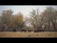 """这里是新疆丨""""黄金单身汉""""哈那提的养骆驼生活"""