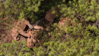 6月12日在玉溪市易門縣十街鄉拍攝的象群(無人機照片)。