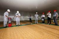 6月24日,保管員在一處存放玉米的糧倉內為公眾展示扦樣作業,以此了解糧食水分、雜質以及蟲害等情況,實現對糧食安全的跟蹤檢查。