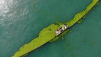 7月6日,船只在海上依靠攔截網清理滸苔(無人機照片)。