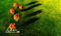 9月2日,无人机拍摄的菖蒲大草原美丽秋景。